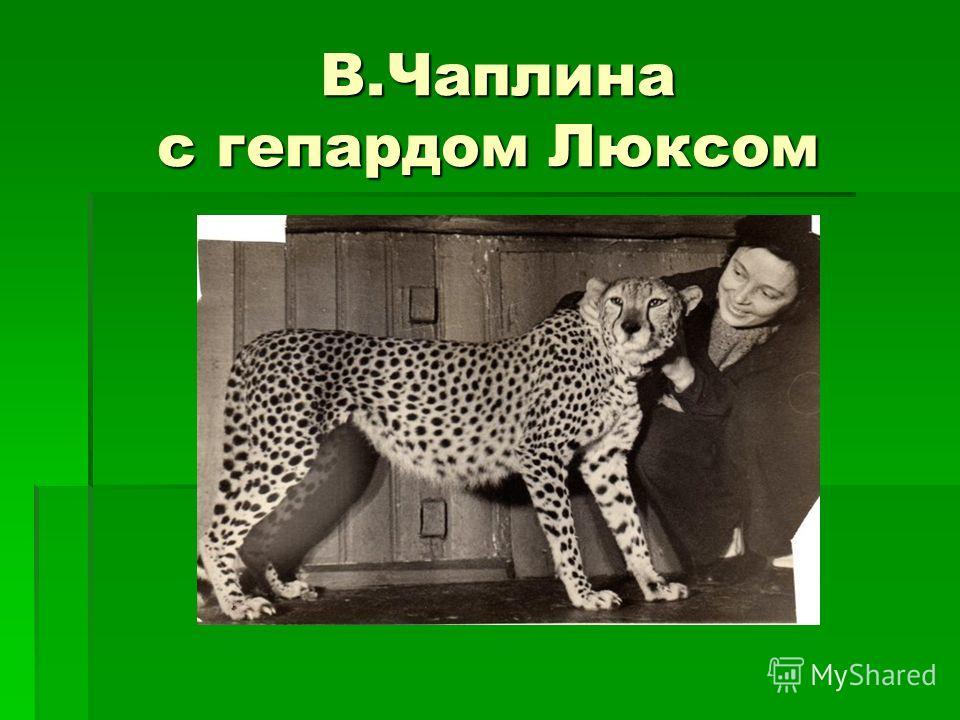В.Чаплина с гепардом Люксом В.Чаплина с гепардом Люксом