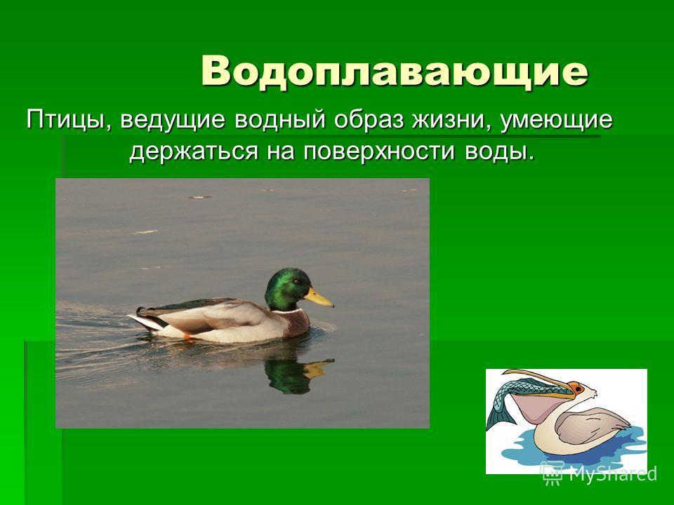 Водоплавающие Водоплавающие Птицы, ведущие водный образ жизни, умеющие держаться на поверхности воды.