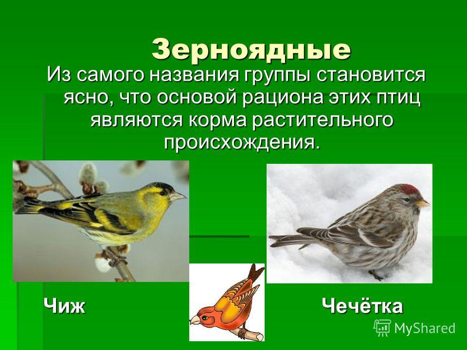 Зерноядные Зерноядные Из самого названия группы становится ясно, что основой рациона этих птиц являются корма растительного происхождения. Из самого названия группы становится ясно, что основой рациона этих птиц являются корма растительного происхожд