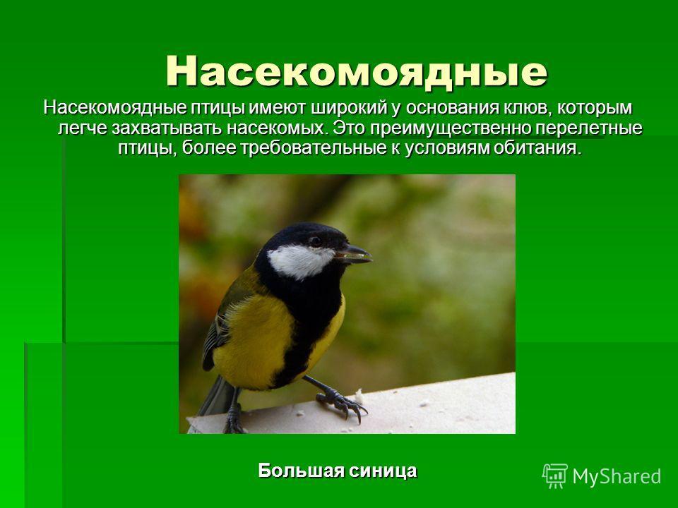 Насекомоядные Насекомоядные Насекомоядные птицы имеют широкий у основания клюв, которым легче захватывать насекомых. Это преимущественно перелетные птицы, более требовательные к условиям обитания. Большая синица