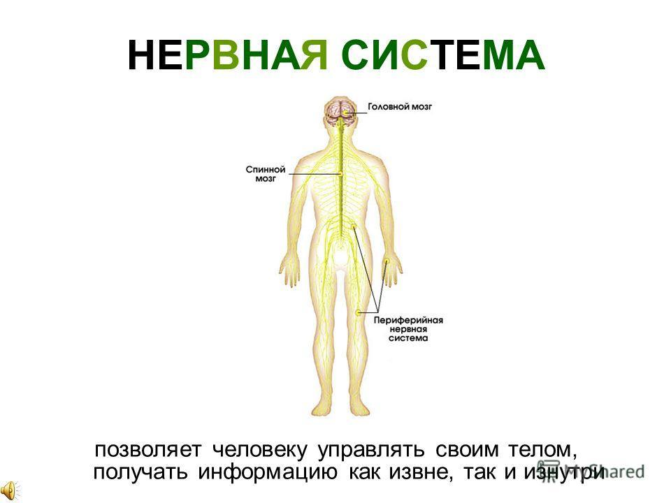 ЖЕЛУДОК дальше пища продвигается по пищеводу в желудок, там переваривается и попадает в кишечник, после чего переваренные остатки выходят через анус