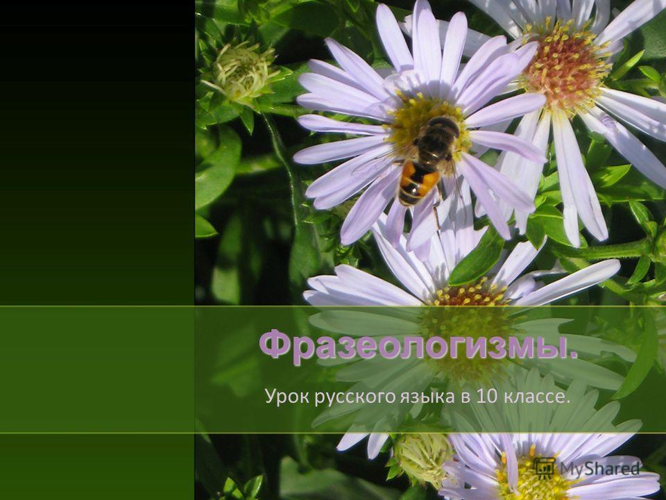 Фразеологизмы. Урок русского языка в 10 классе.