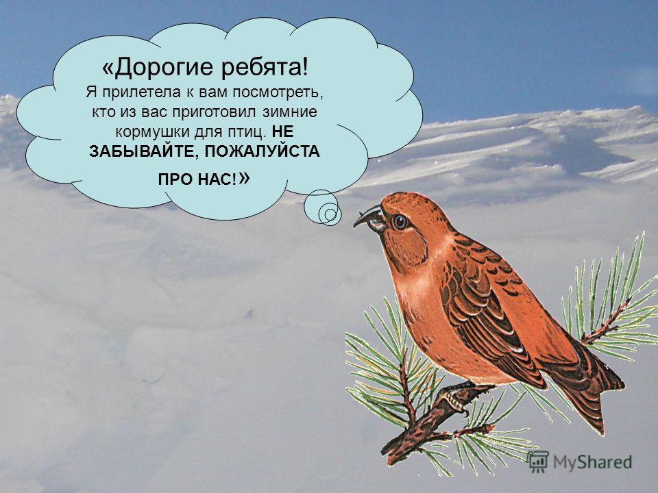 «Дорогие ребята! Я прилетела к вам посмотреть, кто из вас приготовил зимние кормушки для птиц. НЕ ЗАБЫВАЙТЕ, ПОЖАЛУЙСТА ПРО НАС! »