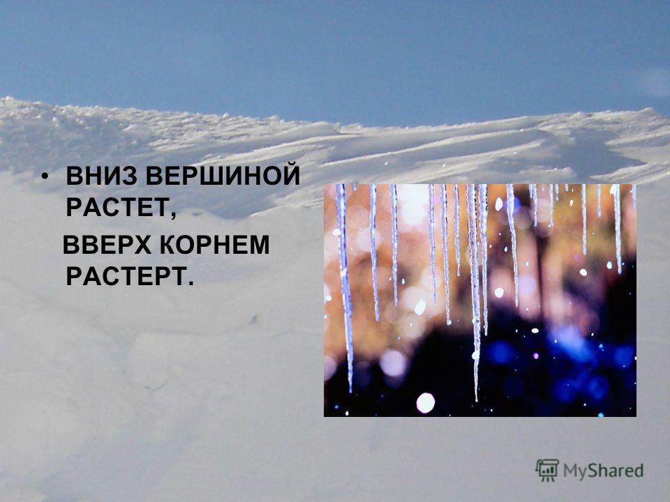 ВНИЗ ВЕРШИНОЙ РАСТЕТ, ВВЕРХ КОРНЕМ РАСТЕРТ.