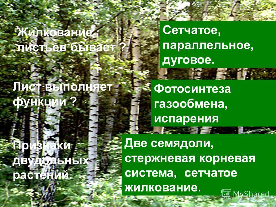 Жилкование листьев бывает… Признаки двудольных растений Жилкование листьев бывает ? Сетчатое, параллельное, дуговое. Лист выполняет функции ? Фотосинтеза газообмена, испарения Признаки двудольных растений. Две семядоли, стержневая корневая система, с