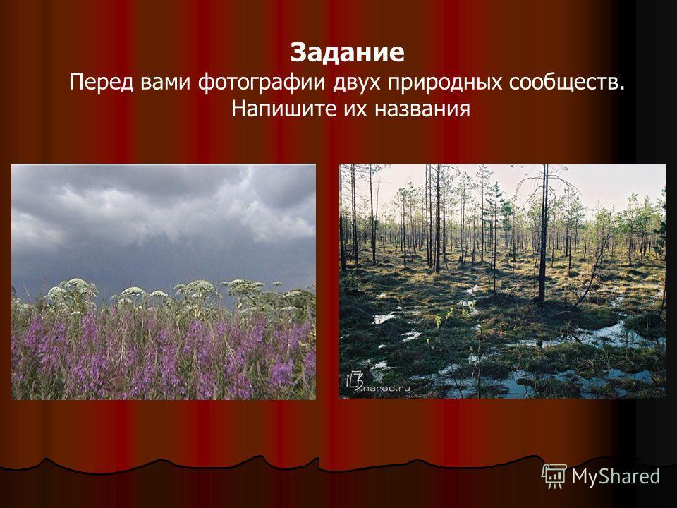 Задание Перед вами фотографии двух природных сообществ. Напишите их названия