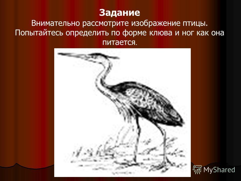 Задание Внимательно рассмотрите изображение птицы. Попытайтесь определить по форме клюва и ног как она питается.