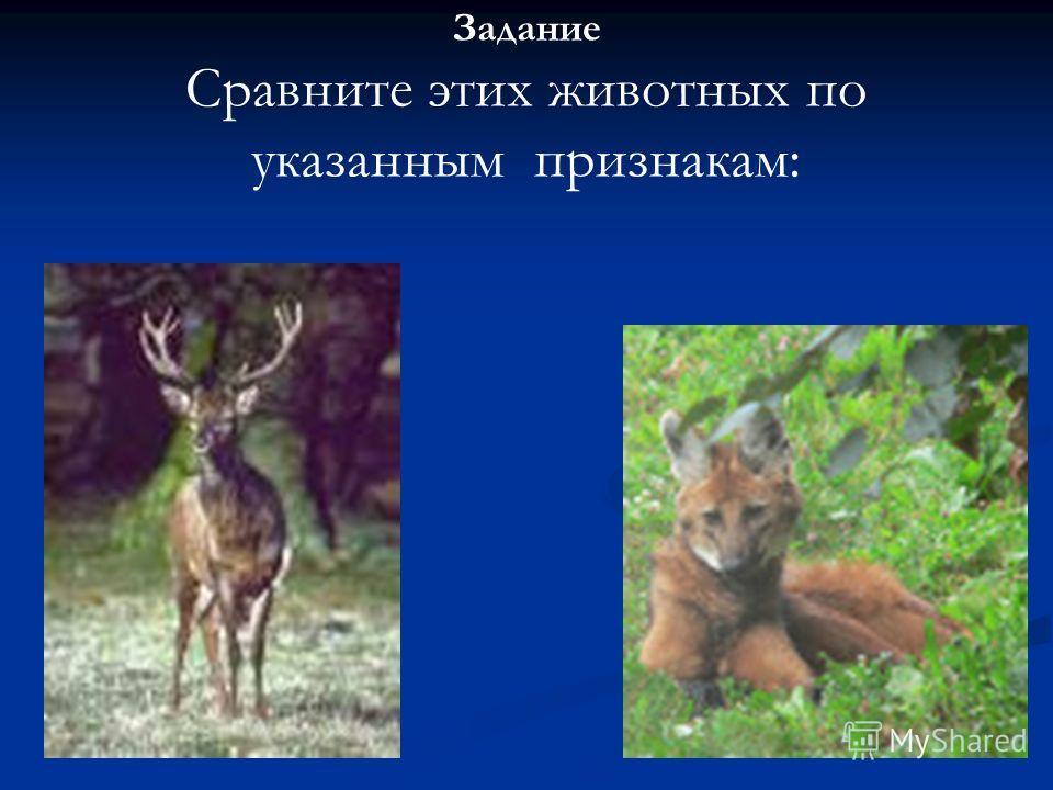 Задание Сравните этих животных по указанным признакам: