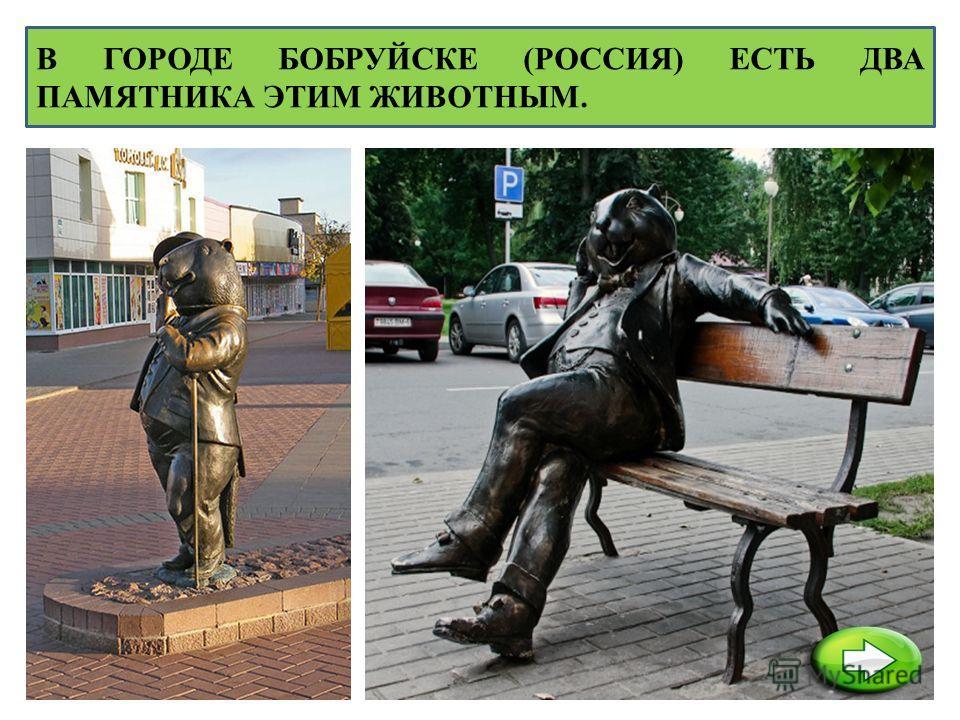 В ГОРОДЕ БОБРУЙСКЕ (РОССИЯ) ЕСТЬ ДВА ПАМЯТНИКА ЭТИМ ЖИВОТНЫМ.