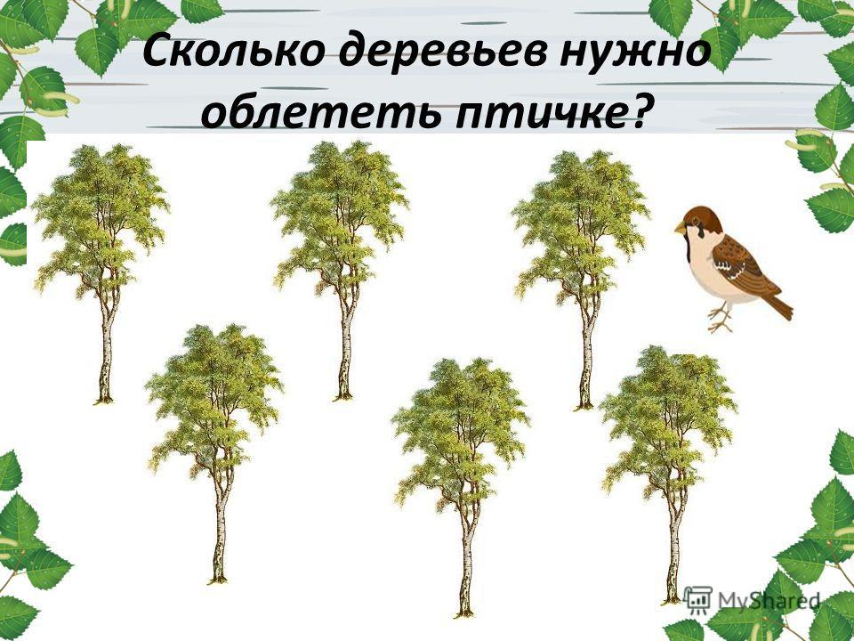 Сколько деревьев нужно облететь птичке?
