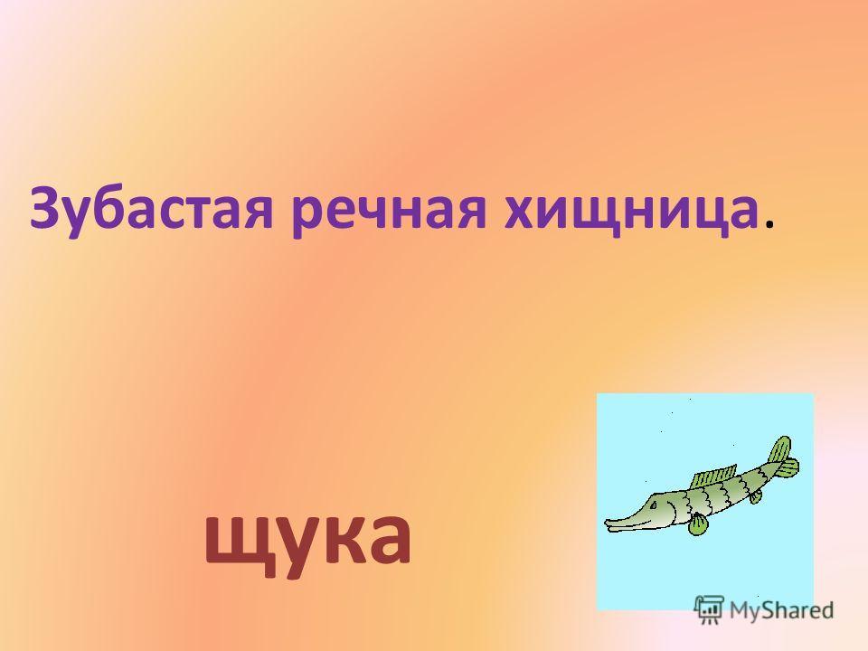Зубастая речная хищница. щука