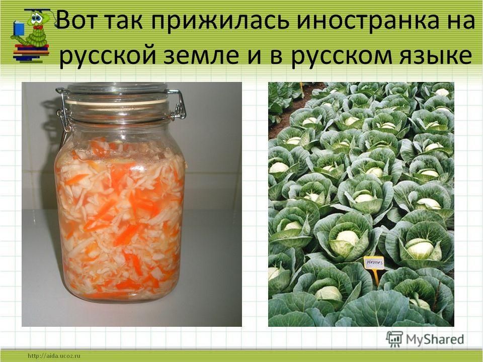 Вот так прижилась иностранка на русской земле и в русском языке