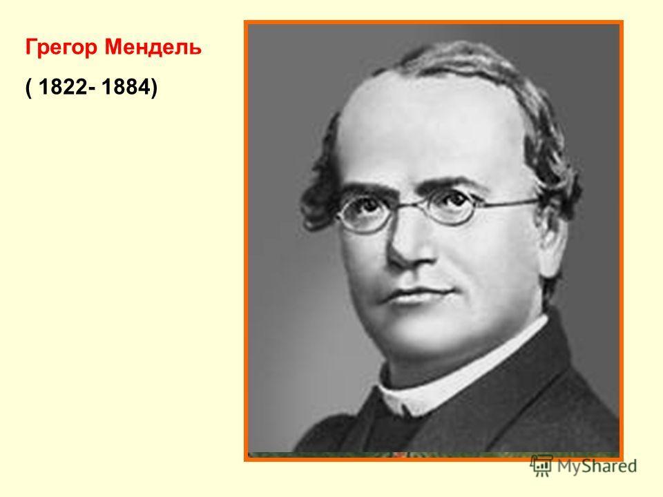 Грегор Мендель ( 1822- 1884)