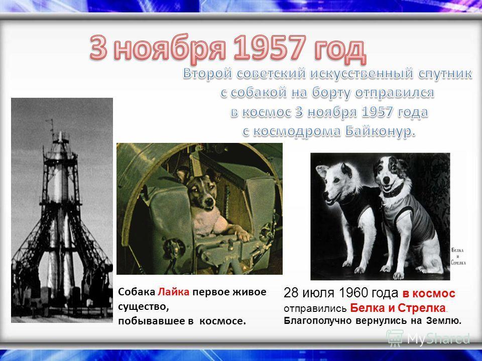 Собака Лайка первое живое существо, побывавшее в космосе. 28 июля 1960 года в космос отправились Белка и Стрелка. Благополучно вернулись на Землю.