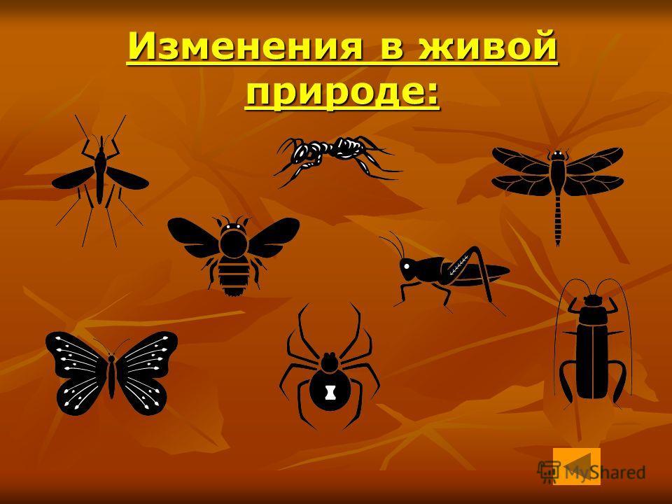 Изменения в живой природе: