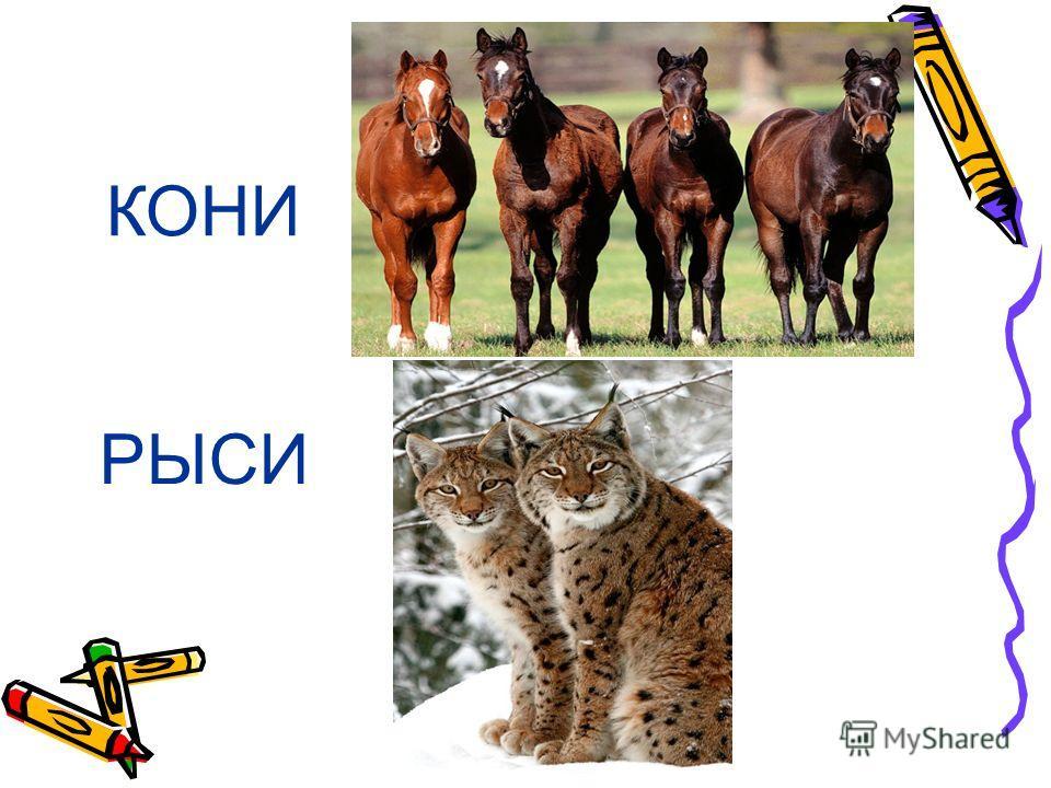 ЛОСИ МЕДВЕДИ