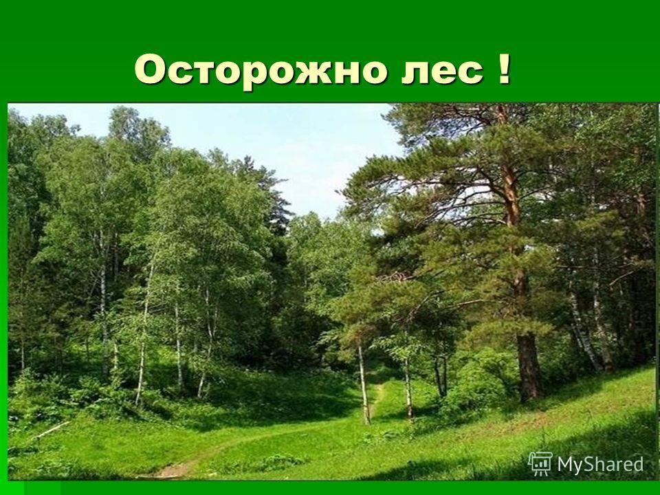 Осторожно лес !