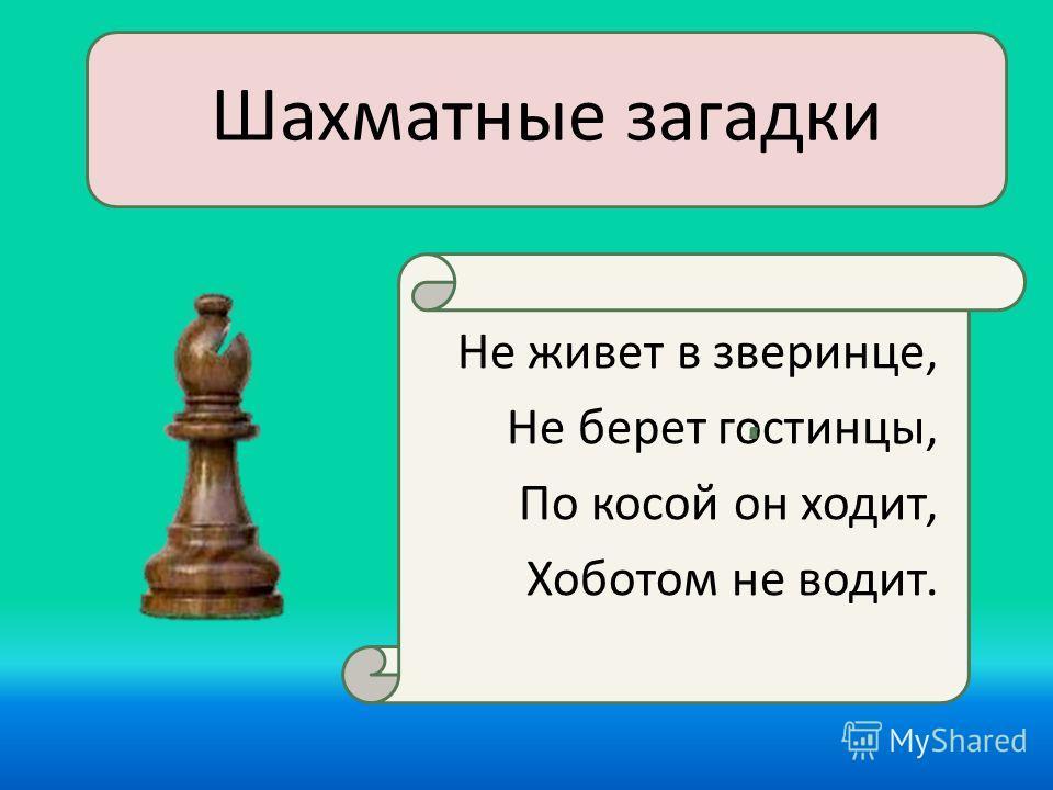 Шахматные загадки Не живет в зверинце, Не берет гостинцы, По косой он ходит, Хоботом не водит.