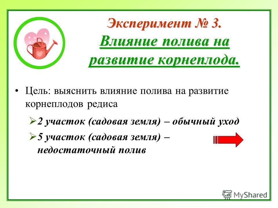 Эксперимент 3. Влияние полива на развитие корнеплода. Цель: выяснить влияние полива на развитие корнеплодов редиса 2 участок (садовая земля) – обычный уход 5 участок (садовая земля) – недостаточный полив