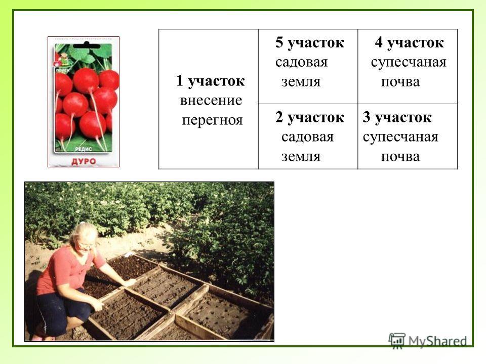 1 участок внесение перегноя 5 участок садовая земля 4 участок супесчаная почва 2 участок садовая земля 3 участок супесчаная почва