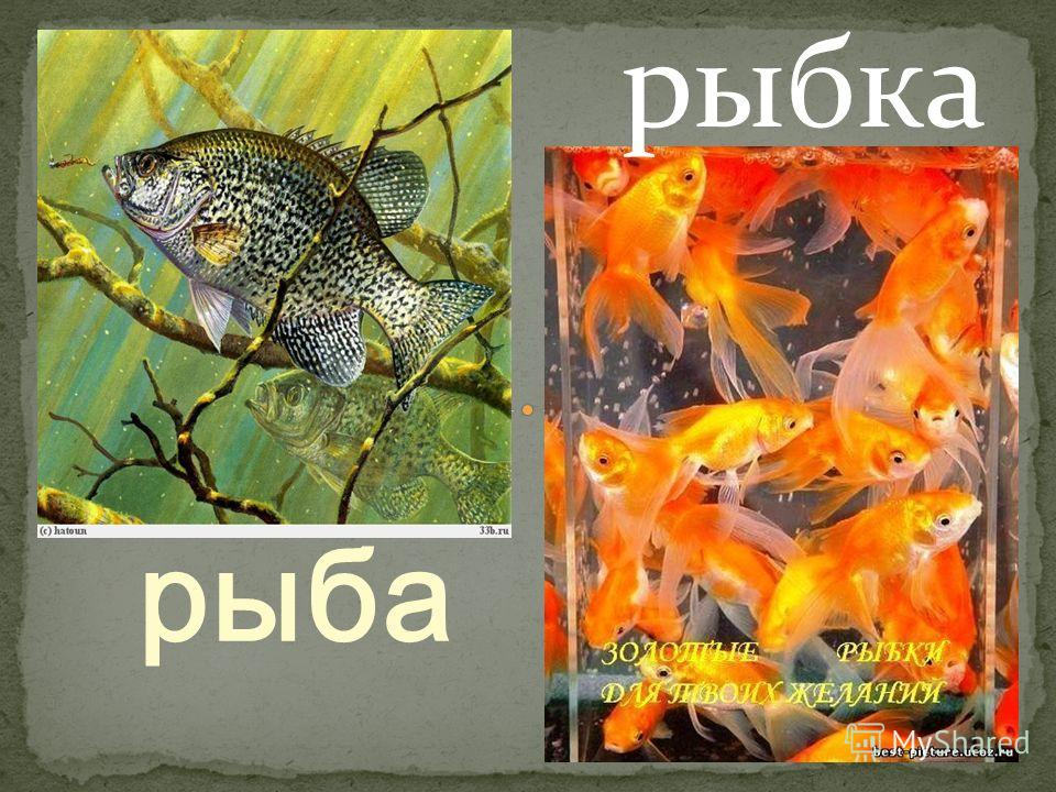 рыба рыбка