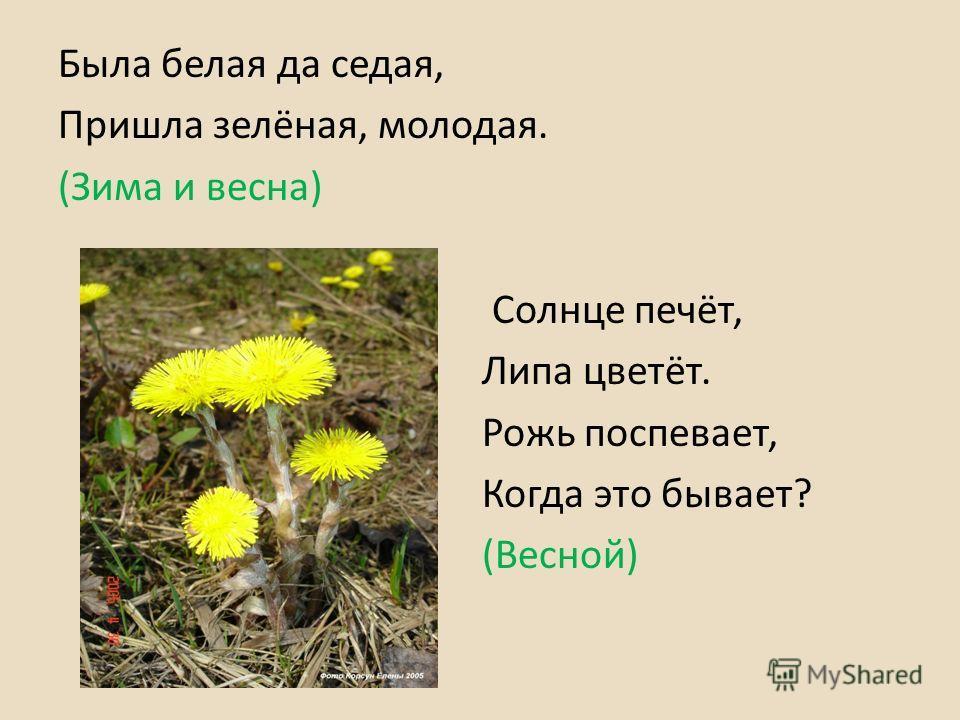 Была белая да седая, Пришла зелёная, молодая. (Зима и весна) Солнце печёт, Липа цветёт. Рожь поспевает, Когда это бывает? (Весной)