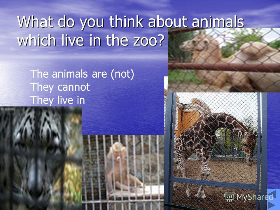WORK IN GROUPS Disscuss in groups the life of animals and make up a story. Disscuss in groups the life of animals and make up a story. I – ANIMALS WHICH LIVE IN THE ZOO II - ENDANGERED ANIMALS III - HOMELESS ANIMALS