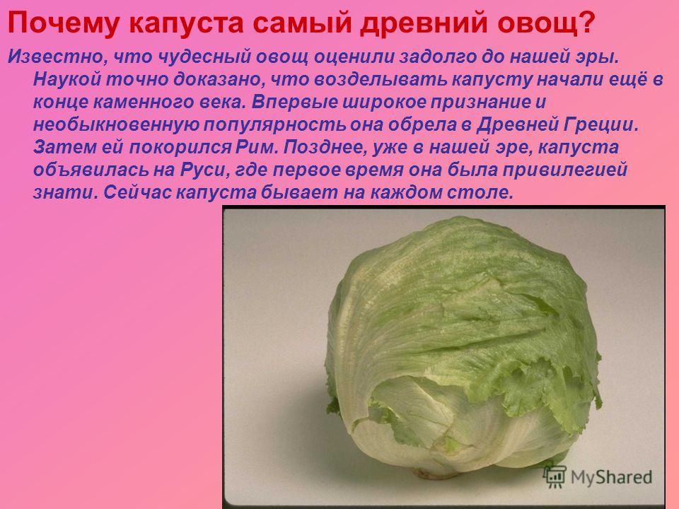 Почему капуста самый древний овощ? Известно, что чудесный овощ оценили задолго до нашей эры. Наукой точно доказано, что возделывать капусту начали ещё в конце каменного века. Впервые широкое признание и необыкновенную популярность она обрела в Древне