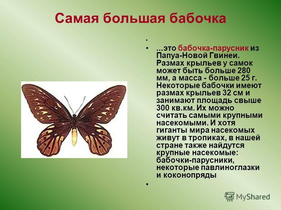 Самая большая бабочка...это бабочка-парусник из Папуа-Новой Гвинеи. Размах крыльев у самок может быть больше 280 мм, а масса - больше 25 г. Некоторые бабочки имеют размах крыльев 32 см и занимают площадь свыше 300 кв.км. Их можно считать самыми крупн