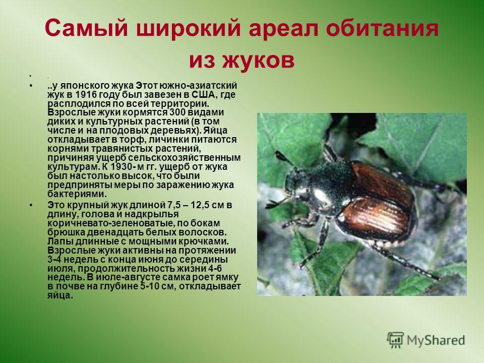 Самый широкий ареал обитания из жуков...у японского жука Этот южно-азиатский жук в 1916 году был завезен в США, где расплодился по всей территории. Взрослые жуки кормятся 300 видами диких и культурных растений (в том числе и на плодовых деревьях). Яй