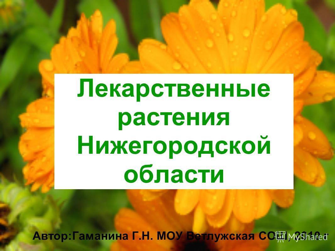 Лекарственные растения Нижегородской области Автор:Гаманина Г.Н. МОУ Ветлужская СОШ, 2010 г