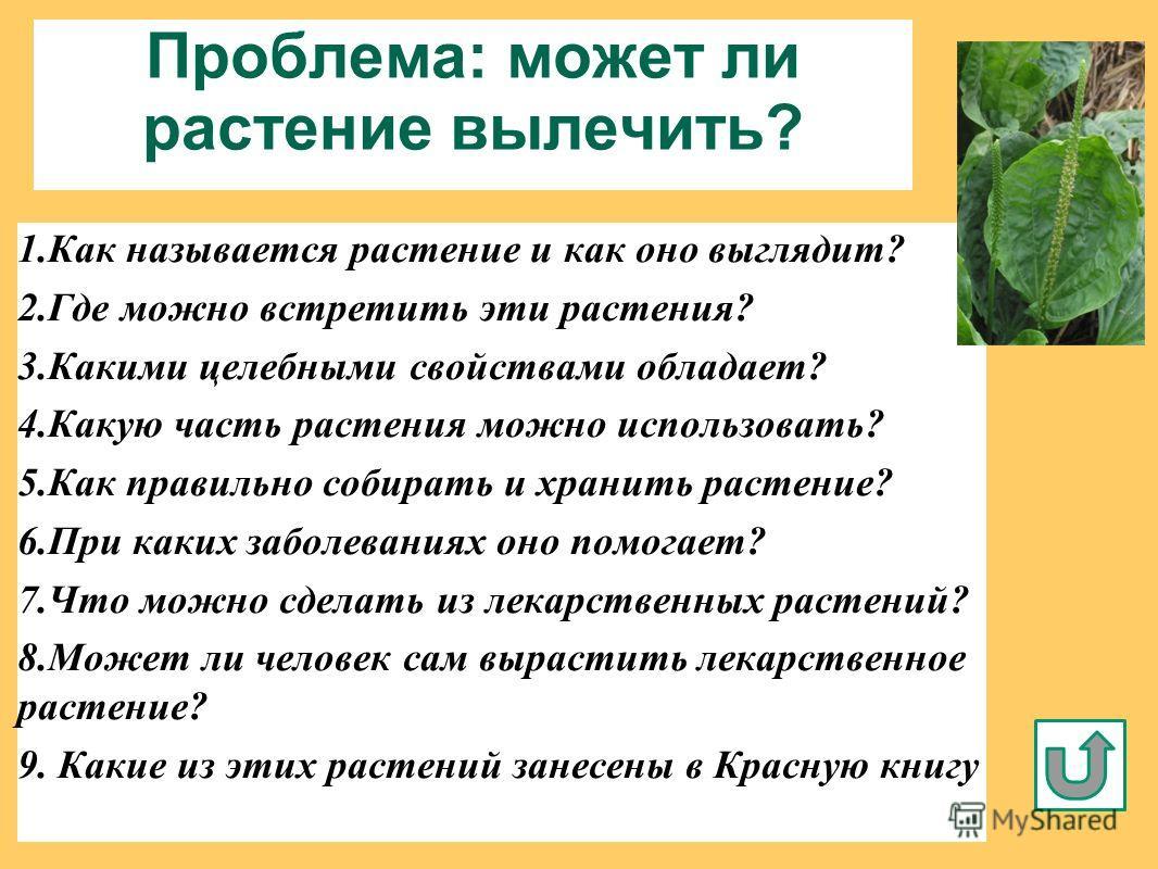 Проблема: может ли растение вылечить? 1. Как называется растение и как оно выглядит? 2. Где можно встретить эти растения? 3. Какими целебными свойствами обладает? 4. Какую часть растения можно использовать? 5. Как правильно собирать и хранить растени