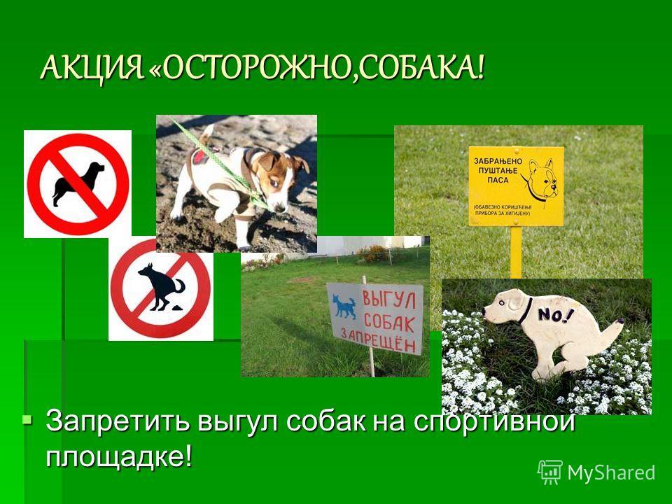 АКЦИЯ «ОСТОРОЖНО,СОБАКА! Запретить выгул собак на спортивной площадке! Запретить выгул собак на спортивной площадке!