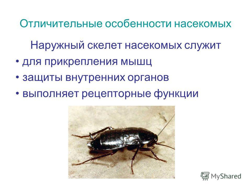 Отличительные особенности насекомых Наружный скелет насекомых служит для прикрепления мышц защиты внутренних органов выполняет рецепторные функции