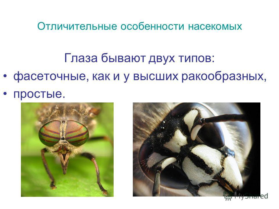 Отличительные особенности насекомых Глаза бывают двух типов: фасеточные, как и у высших ракообразных, простые.
