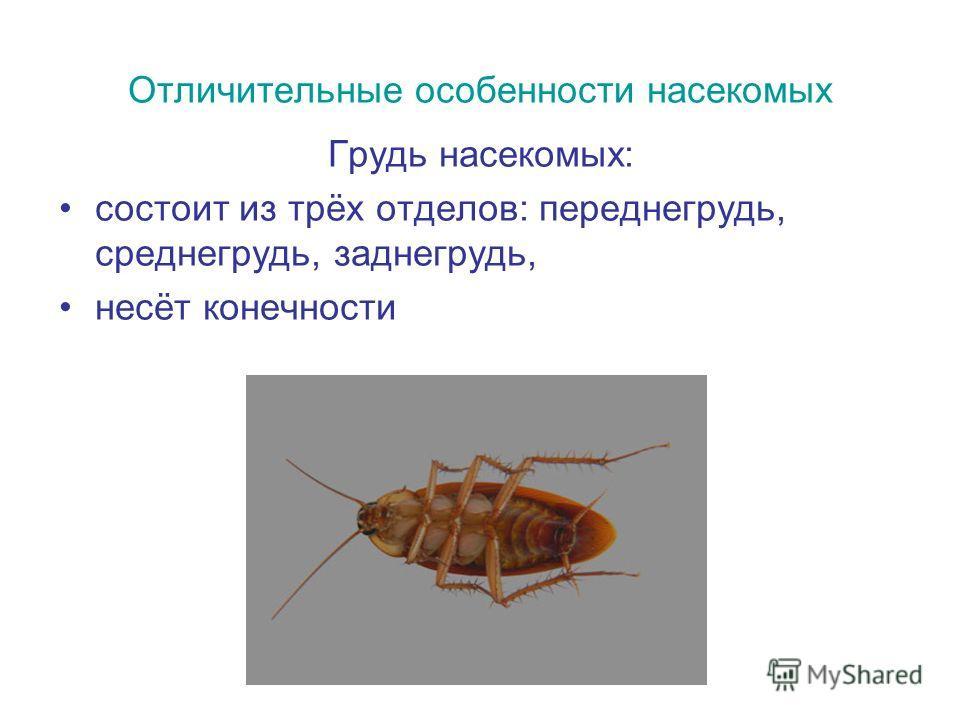 Отличительные особенности насекомых Грудь насекомых: состоит из трёх отделов: переднегрудь, среднегрудь, заднегрудь, несёт конечности