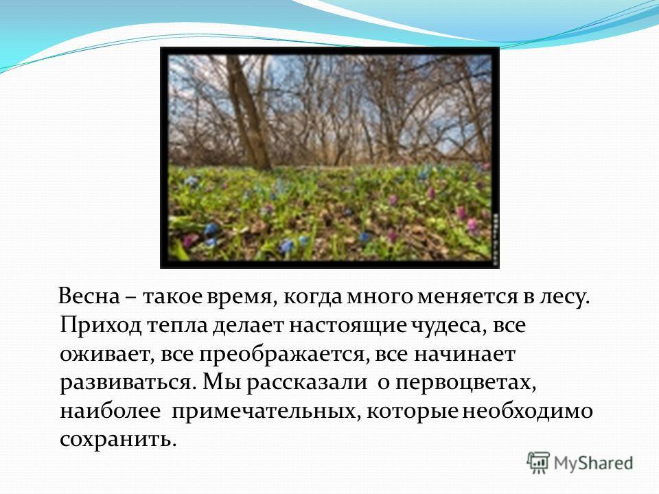 Весна – такое время, когда много меняется в лесу. Приход тепла делает настоящие чудеса, все оживает, все преображается, все начинает развиваться. Мы рассказали о первоцветах, наиболее примечательных, которые необходимо сохранить.