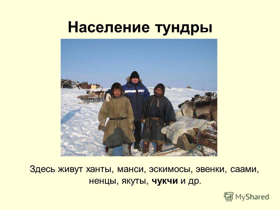 Население тундры Здесь живут ханты, манси, эскимосы, эвенки, саами, ненцы, якуты, чукчи и др.