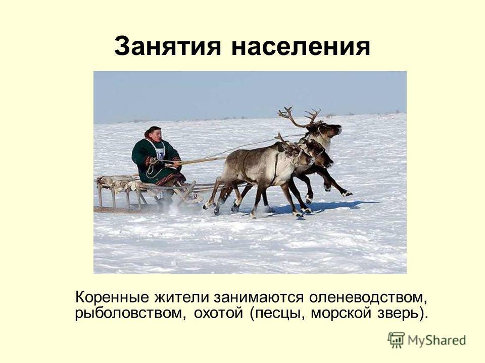 Занятия населения Коренные жители занимаются оленеводством, рыболовством, охотой (песцы, морской зверь).