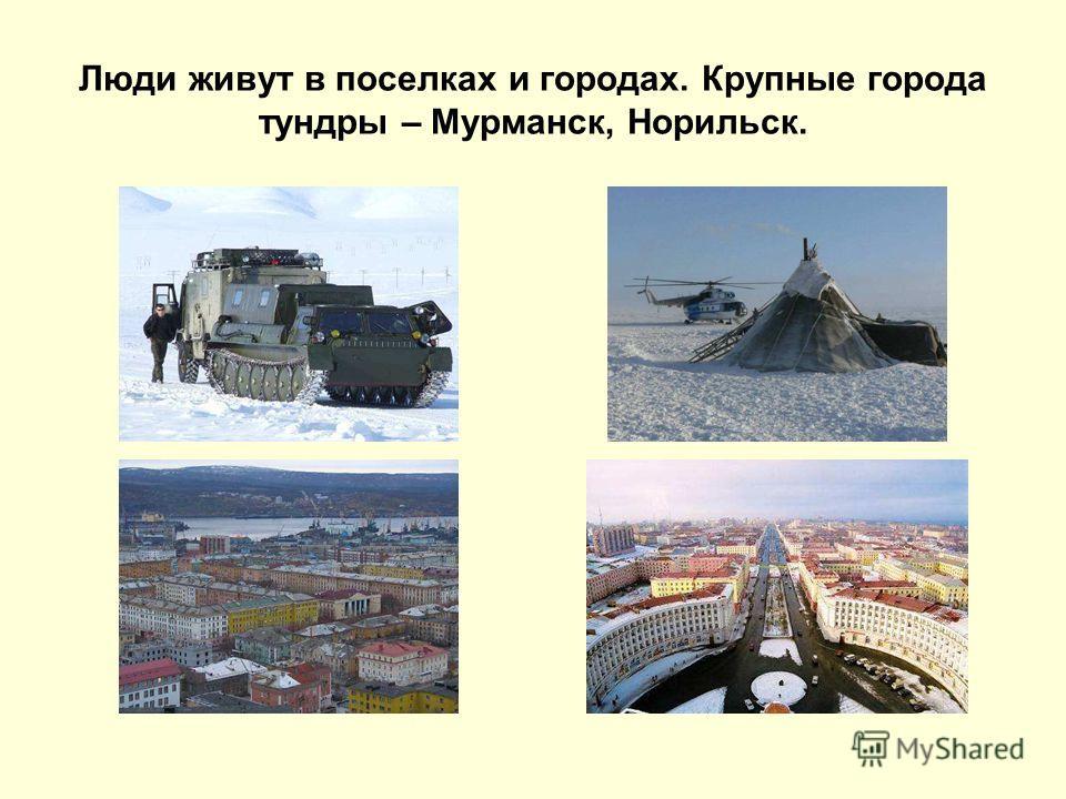 Люди живут в поселках и городах. Крупные города тундры – Мурманск, Норильск.