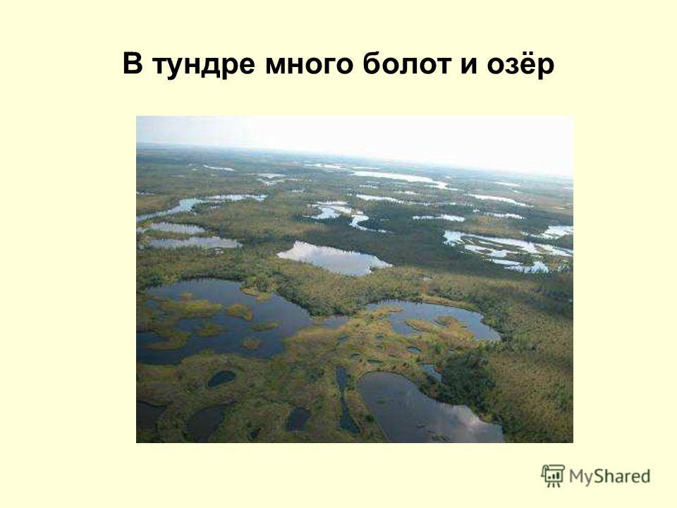 В тундре много болот и озёр
