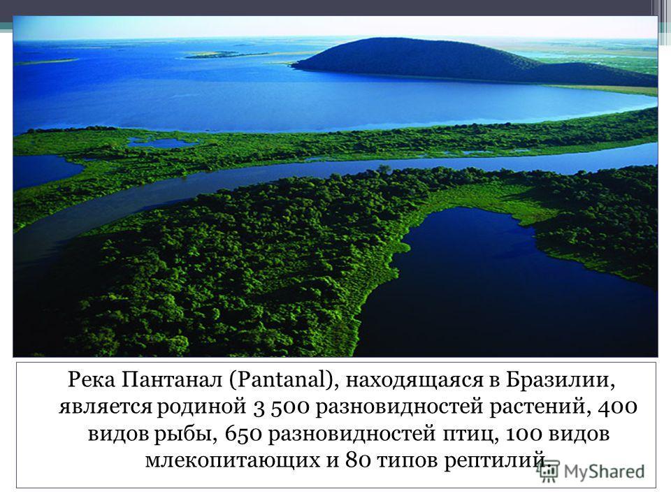 Река Пантанал (Pantanal), находящаяся в Бразилии, является родиной 3 500 разновидностей растений, 400 видов рыбы, 650 разновидностей птиц, 100 видов млекопитающих и 80 типов рептилий.
