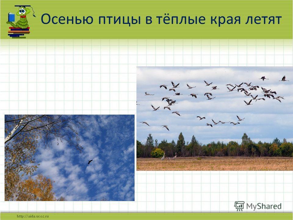 Осенью птицы в тёплые края летят