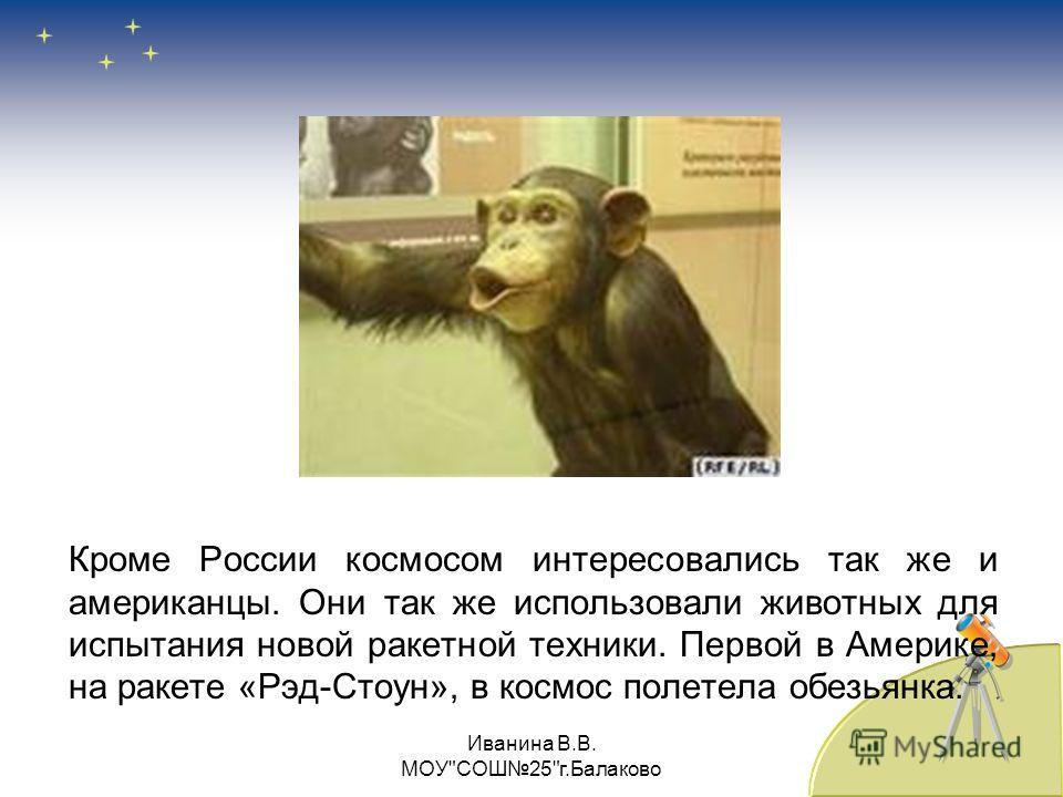 Кроме России космосом интересовались так же и американцы. Они так же использовали животных для испытания новой ракетной техники. Первой в Америке, на ракете «Рэд-Стоун», в космос полетела обезьянка. Иванина В.В. МОУСОШ25г.Балаково