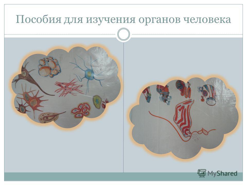 Пособия для изучения органов человека
