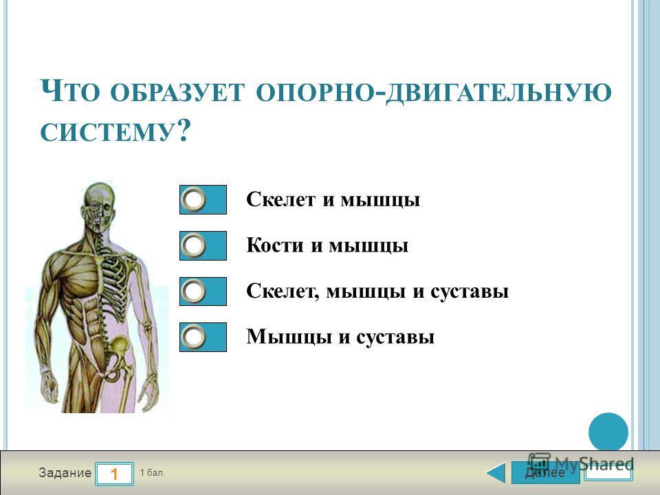 Далее 1 Задание 1 бал. 1111 2222 3333 4444 Ч ТО ОБРАЗУЕТ ОПОРНО - ДВИГАТЕЛЬНУЮ СИСТЕМУ ? Скелет и мышцы Кости и мышцы Скелет, мышцы и суставы Мышцы и суставы