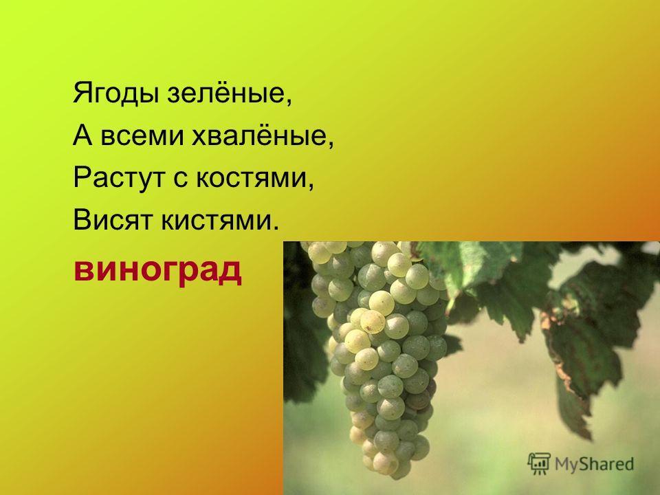 Ягоды зелёные, А всеми хвалёные, Растут с костями, Висят кистями. виноград