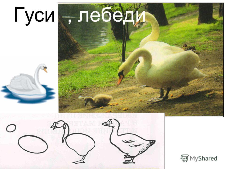 Гуси, лебеди