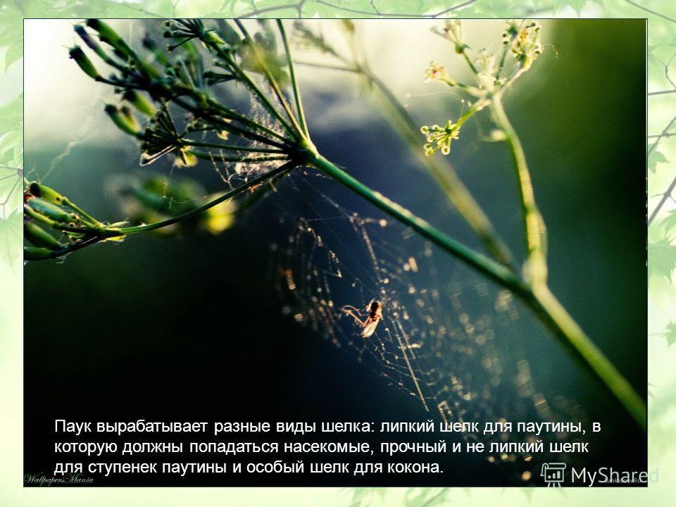 Паук вырабатывает разные виды шелка: липкий шелк для паутины, в которую должны попадаться насекомые, прочный и не липкий шелк для ступенек паутины и особый шелк для кокона.