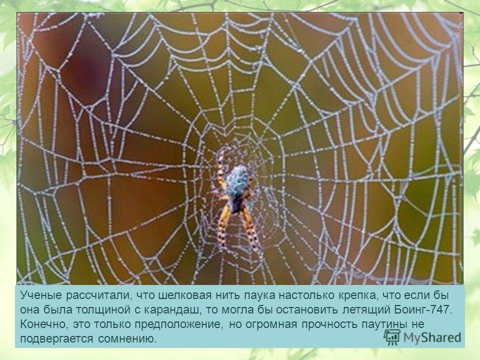 Ученые рассчитали, что шелковая нить паука настолько крепка, что если бы она была толщиной с карандаш, то могла бы остановить летящий Боинг-747. Конечно, это только предположение, но огромная прочность паутины не подвергается сомнению.